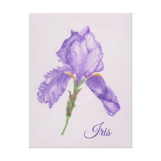 Purple Iris, Botanical Style, Colored Pencil Art Canvas Print