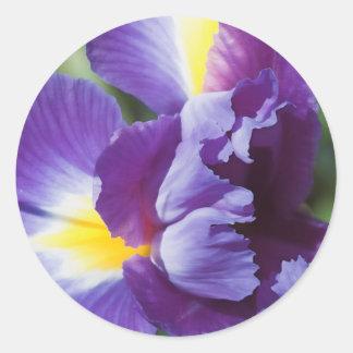 purple iris close up round sticker