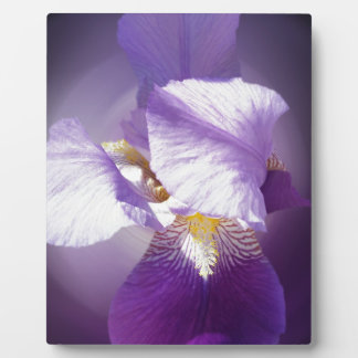 purple iris flower plaque