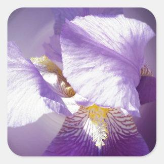 purple iris flower square sticker