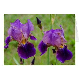 Purple Iris - Flowers - Mother's Day - Birthday Card