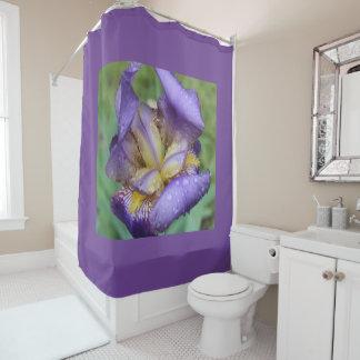 Purple Iris (Iris Germanica)