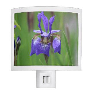 Purple Iris Nite Lights