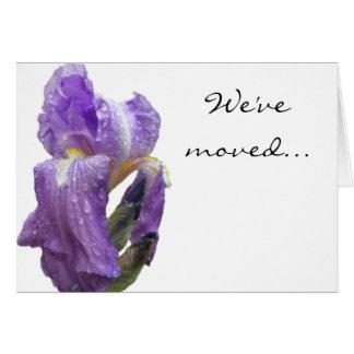 Purple Iris Photograph Announcement