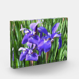 Purple Irises Acrylic Photo Block