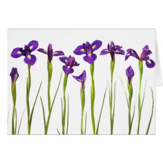 Purple Irises - Iris Flower Customized Template