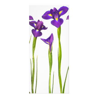 Purple Irises - Iris Flower Customized Template Rack Card