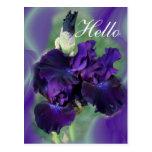 Purple Irises-lvsg Post Cards