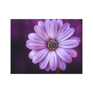 Purple Lavender Daisy Color Canvas Print