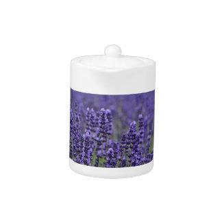 Purple lavender meadow