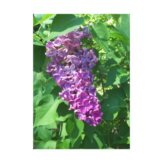Purple Lilac Canvas Print