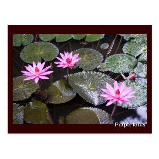 Purple lotus postcard