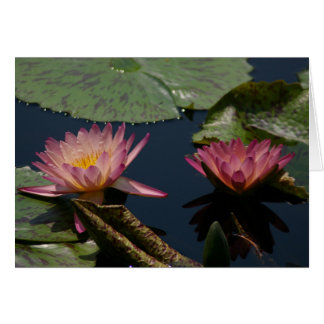 Purple Lotus Waterlilies Card