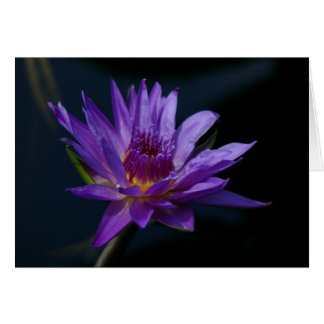Purple Lotus Waterlily Card