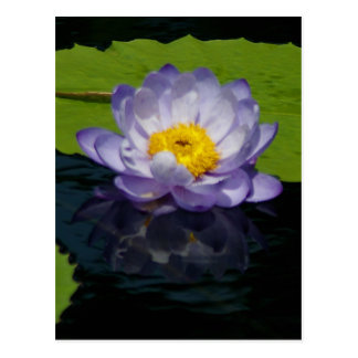 Purple Lotus Waterlily Postcard