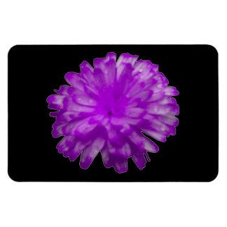 Purple Marigold Premium Magnet