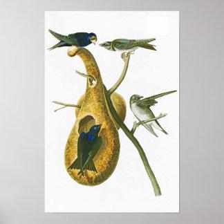 Purple Martin John James Audubon Birds of America Poster