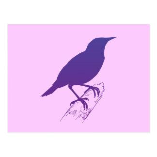 Purple Meadow Lark Postcard