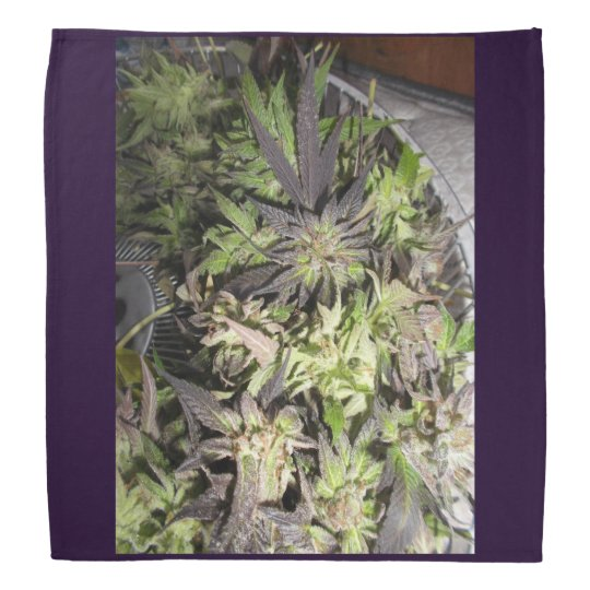 PURPLE MEDICINE FLOWER b Bandana