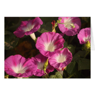 Purple Morning Glories Greeting Card