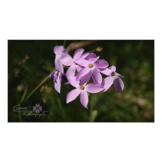 Purple Mountain Flowers Photo Print