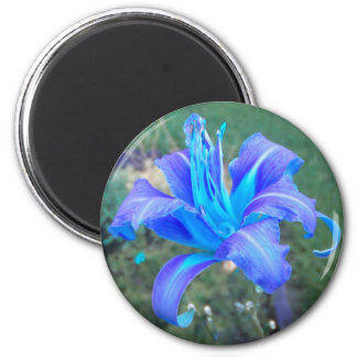 Purple N  Turquoise Daylily Magnet