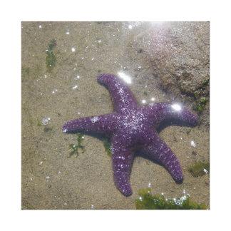 Purple Ochre Star - Canvas