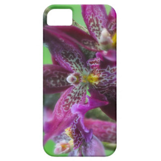 Purple Orchid iPhone 5/5s Case For The iPhone 5