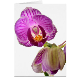 Purple Orchid Notecard