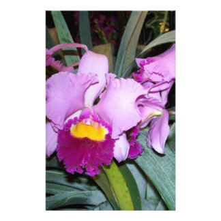 Purple Orchid Stationery