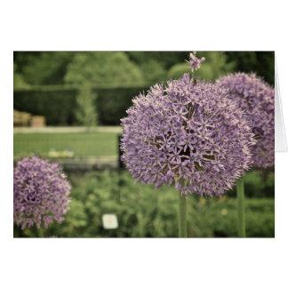 Purple Ornamental Onion Card