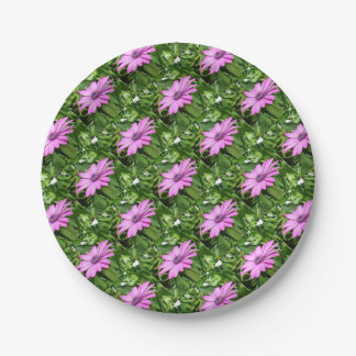 Purple Osteospermum Against Green Leaves 7 Inch Paper Plate