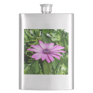 Purple Osteospermum Against Green Leaves Hip Flask