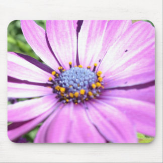 Purple Osteospermum Mouse Pads