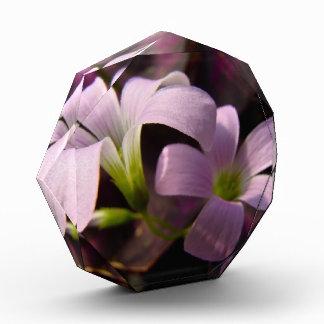 Purple Oxalis Blossoms