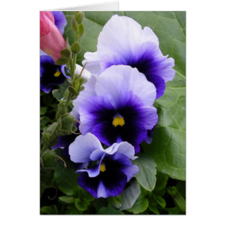 Purple Pansies Card
