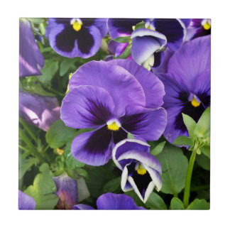 purple pansies ceramic tiles
