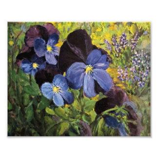 Purple Pansies Photo Print