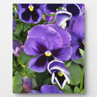 purple pansies plaque