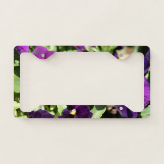 Purple Pansy Flowers License Plate Frame