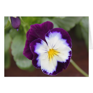 Purple Pansy Note Cards, blank inside Card