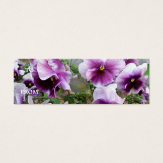 Purple Pansy Profile Card