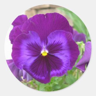 Purple Pansy Stickers