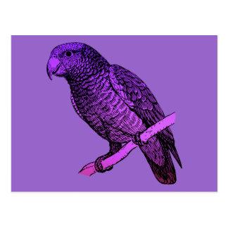Purple Parrot Postcard