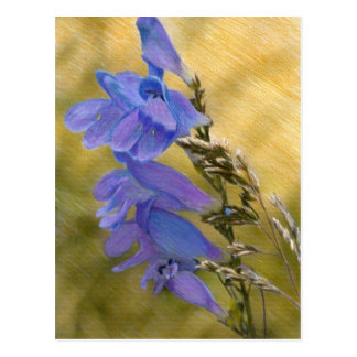 Purple Penstemon Mixed Media Drawing Postcard