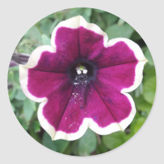 Purple Petunia Classic Round Sticker