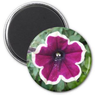 Purple Petunia Magnet