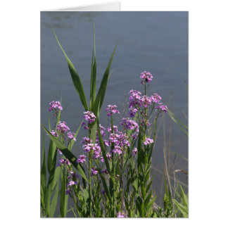 Purple Phlox Greeting Card