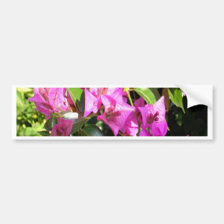 Purple Pink Bougainvillia In Blossom Bumper Sticker