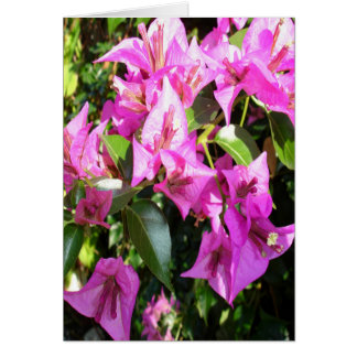 Purple Pink Bougainvillia In Blossom Card